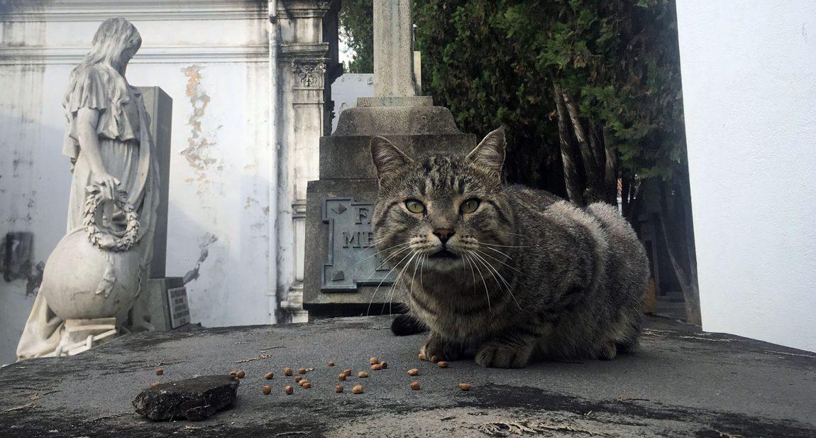 Aquí hay gatos que sobreviven a los perros